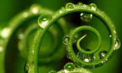 Zelf-actualisatie en het milieu